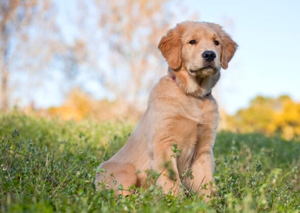 Most Popular Names For America S Top 10 Dog Breeds