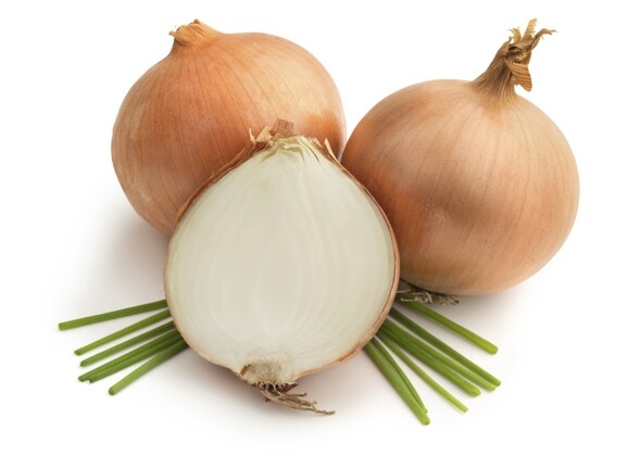 Can Dogs Est Garlic