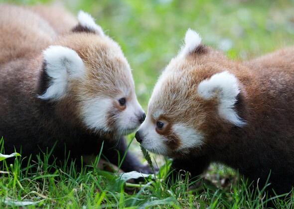 10 Cutest Zoo Babies Of 2012