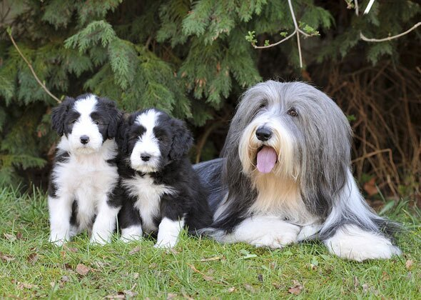 Dog Breeds That Look Different As Puppies And Adults Photo Gallery