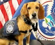 After living through abuse, Murray is now an officer with the Beagle Brigade.