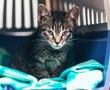 Kitten in crate