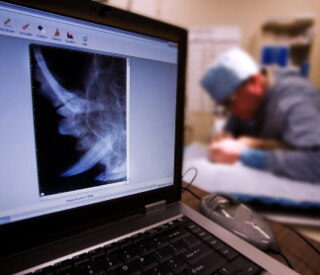 Veterinarian working on animals teeth with mouth X-ray in foreground