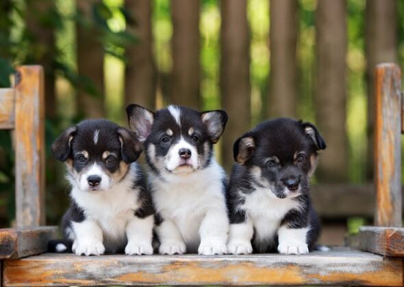 10 Most Popular Puppy Names Of 2016