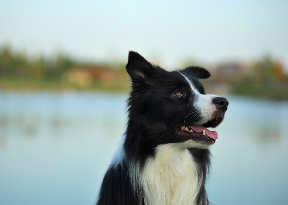 The 10 Most Trainable Dog Breeds