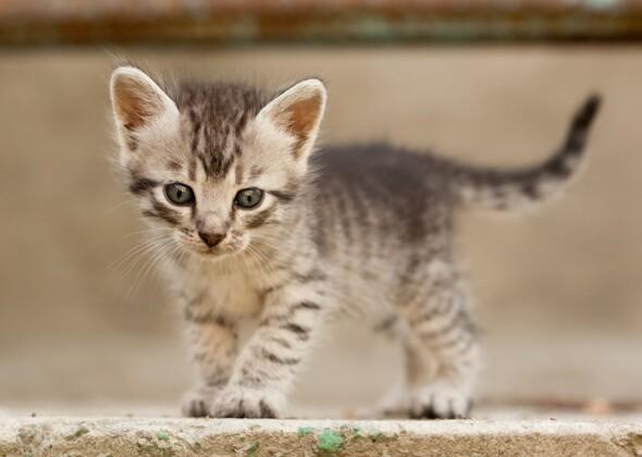 N Cat Names 10 Most Popular Kitten...