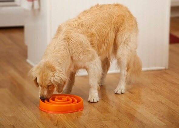 oh feeders puppy bowl dog bowls fun product food slow feeder
