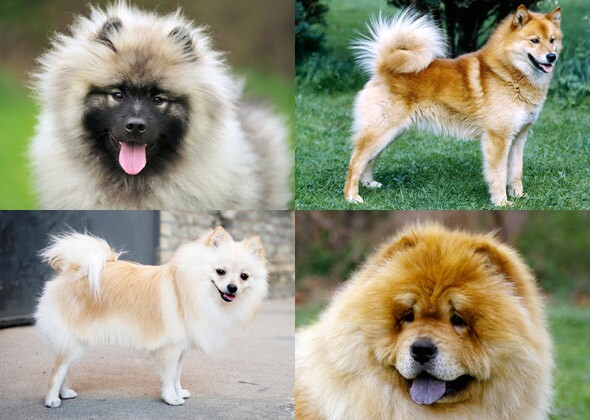 dog breeds you might not know are related. Black Bedroom Furniture Sets. Home Design Ideas