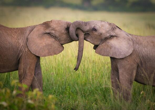 N F Elephant 2 9 Animal Love Stories ...