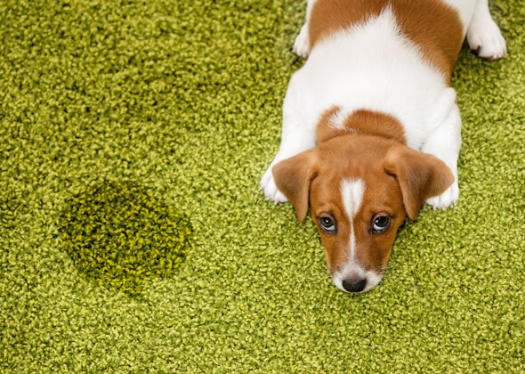 10 Frequently Asked Questions About Puppies