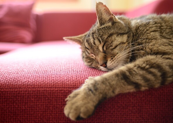 Image result for sleeping cat on a couch