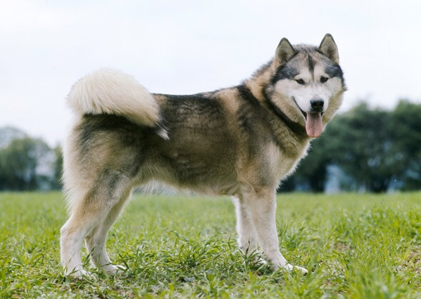 Dog Breed Names You Re Probably Mispronouncing