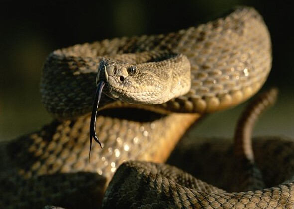 10 Snakes Spiders And Other Creatures That Are Dangerous To Your Dog And Cat