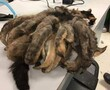 Shelter shaves neglected cat's fur