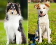 Purebred and mixed breed dogs