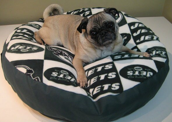 dc52ece68 Our Favorite NFL Dog Products for Football Season