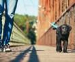 Puppy walking on leash