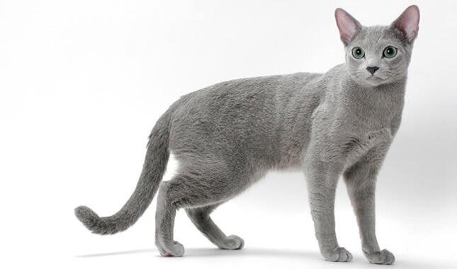 cat food walmart