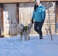 莎拉·伍顿和阿尔玛在雪中