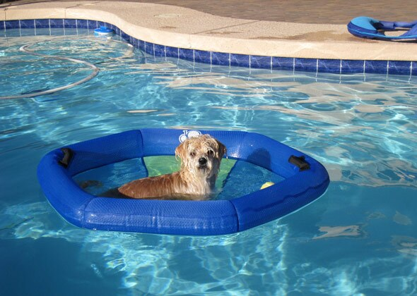 9 Photos Of Dogs Who Don 39 T Want Summer To End