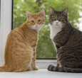 Two cats on windowsill