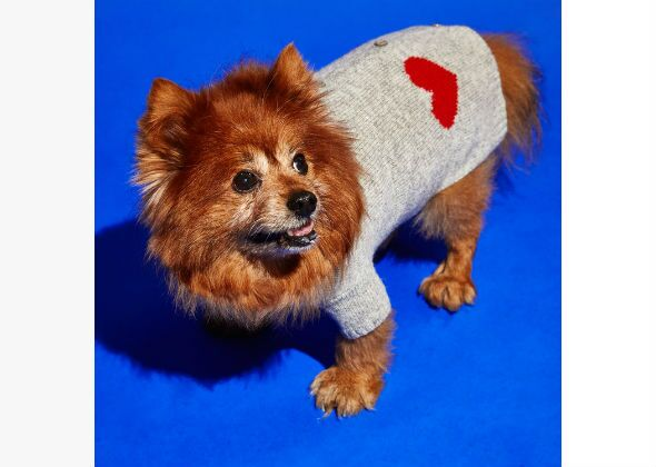 12 Dog Sweaters That Really Make A Statement