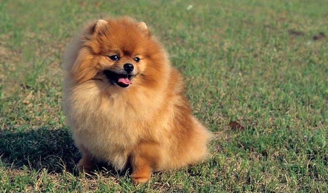 Dog Breeds Vetstreet