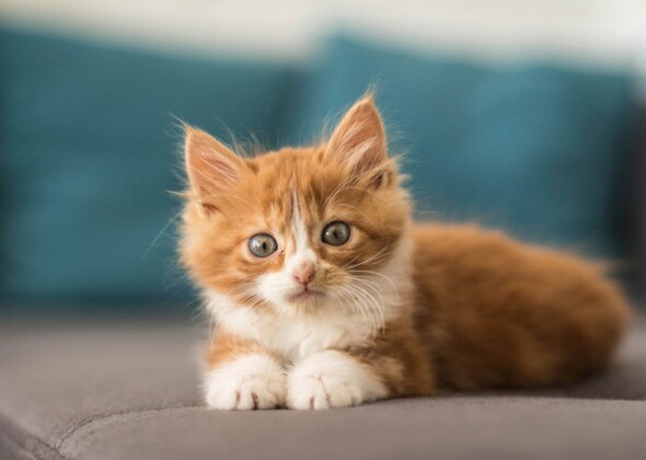 N Cat Names The Most Popular Kitte...