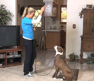 Train your dog to stop barking