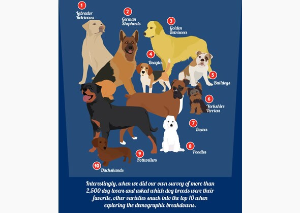 Most Popular Dog Breeds In The United States By Region