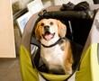 Disabled dog in stroller