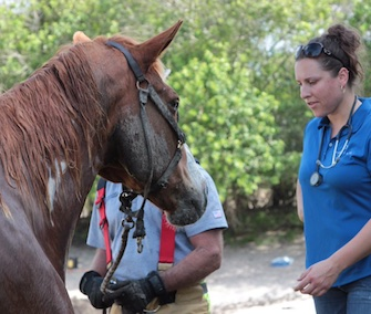 A veterinarian examines Skip after the sedation has worn off.