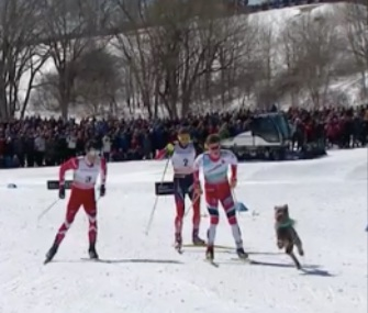 A dog jumped into the World Cup cross country ski race in Quebec City over the weekend.